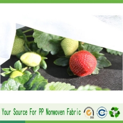 protection des arbres fruitiers polypropylene